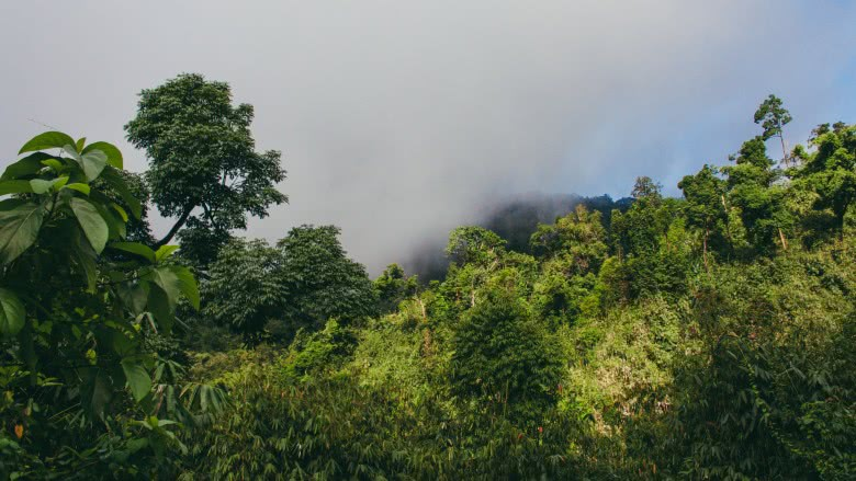 northern-mountain-forest-complex-myanmar Places on Earth we still haven't explored