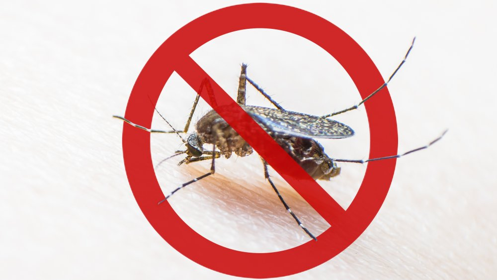 """Mosquito in red """"no"""" symbol"""